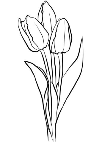 343x480 Tulip Coloring Pages Free Coloring Pages