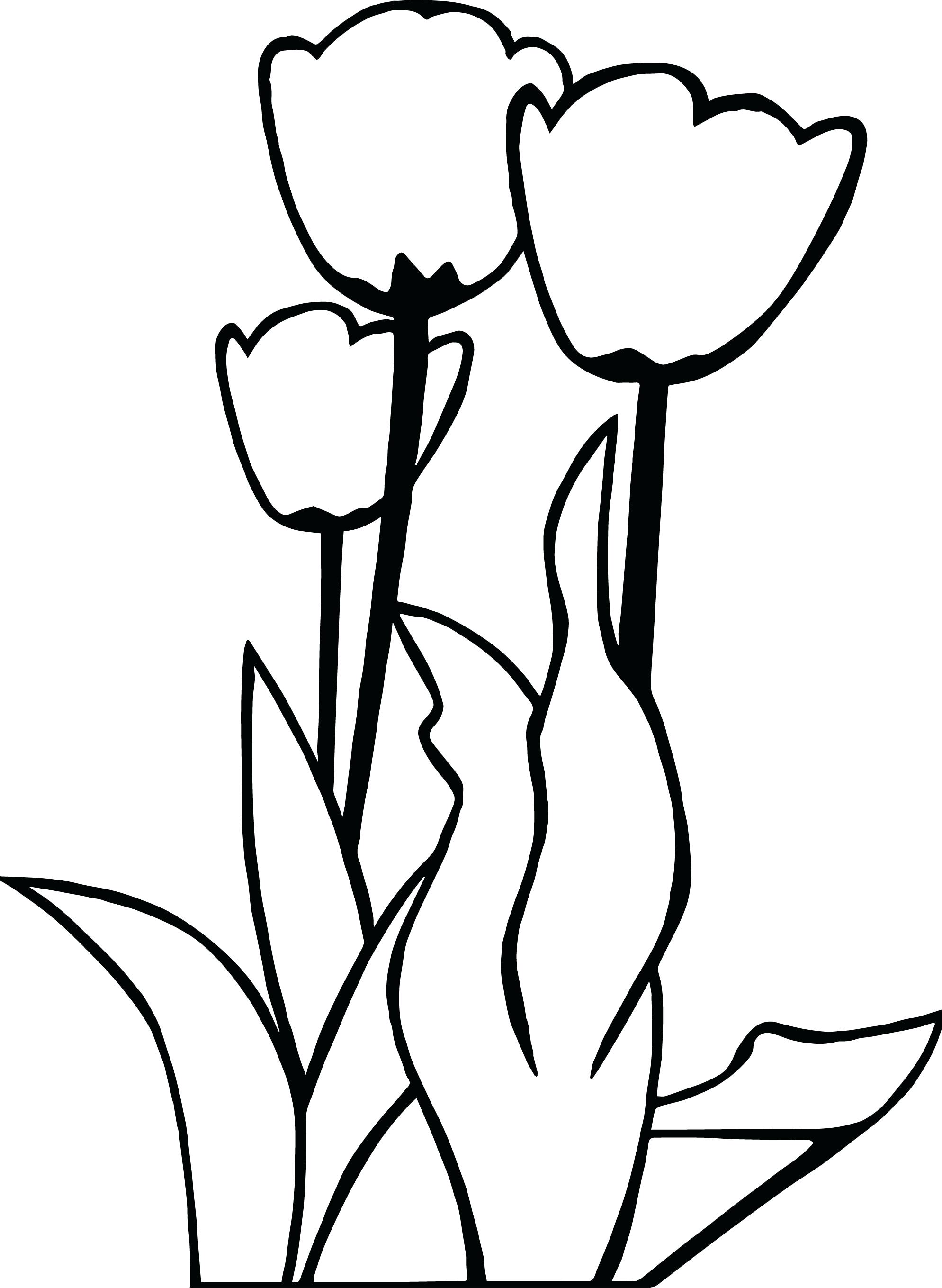 1989x2718 Coloring Tulip Coloring Page Tulips Flower Simple. Tulip Coloring