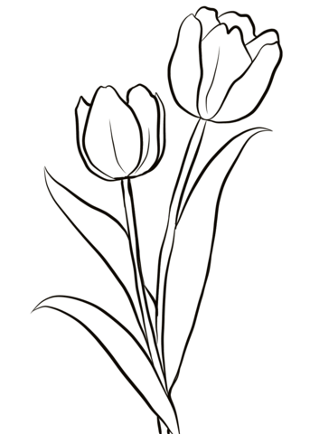 343x480 Drawings Flowers Tulips Coloring Pages Butterfly With Flowers