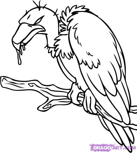 574x642 Vulture Clipart Sketch