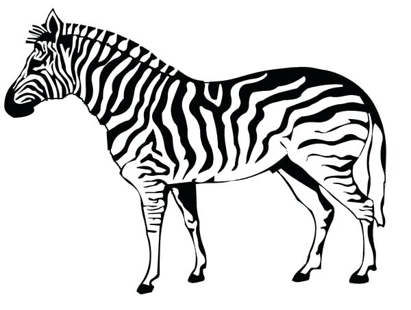 600x453 Baby Zebra Coloring Pages Simple Zebra Printable Coloring Pages