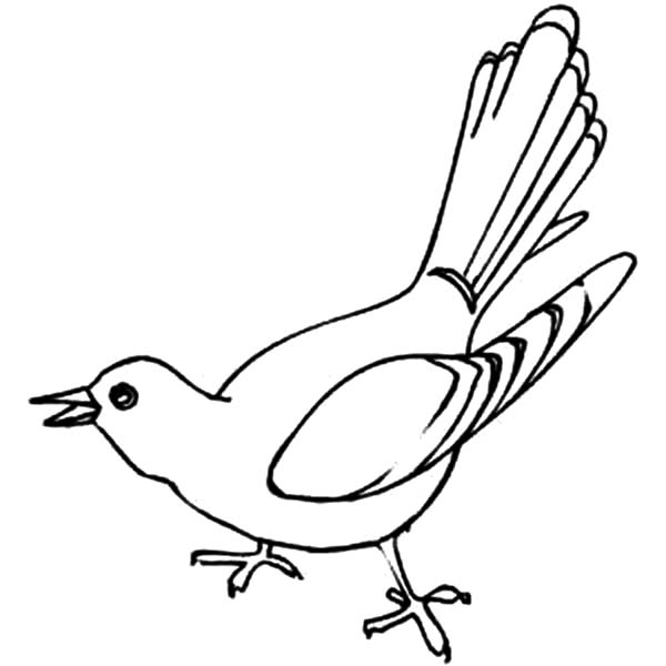 600x600 Cuckoo Bird Is Singing Coloring Pages Cuckoo Bird Is Singing