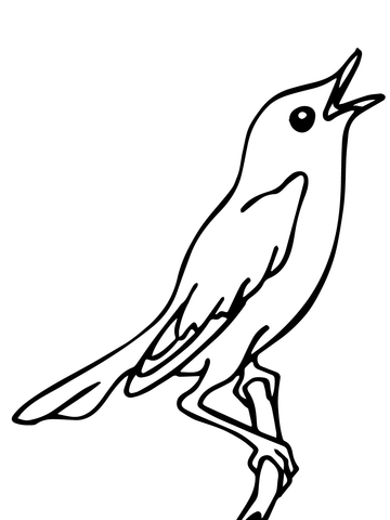 360x480 Singing Nightingale Coloring Page Free Printable Coloring Pages