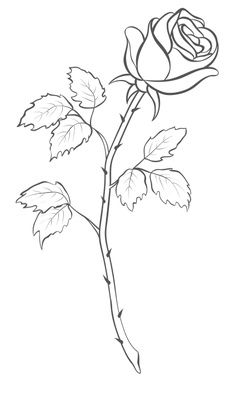 240x400 Rose Drawing Single Flower Outline Tattoo Stencil Just Free