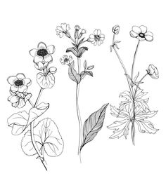 236x271 Today Were Posting Tutorial For Drawing Clover Blossoms