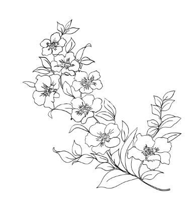 380x400 Cherry Blossoms