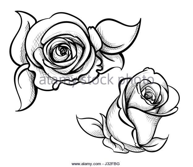 624x540 Ink Drawing Single Rose Stock Photos Amp Ink Drawing Single Rose