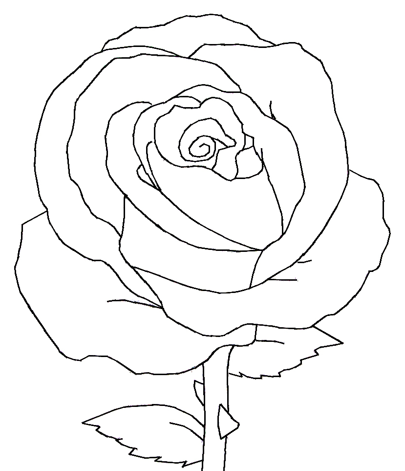 829x963 Rose Flower Black And White Drawing Black Vector Outline Of Single