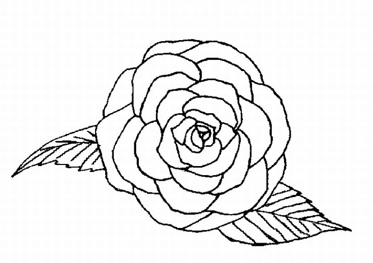 734x518 Single Rose Coloring Page Amp Coloring Book