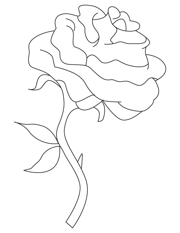 612x792 Single Rose Coloring Page Download Free Single Rose Coloring