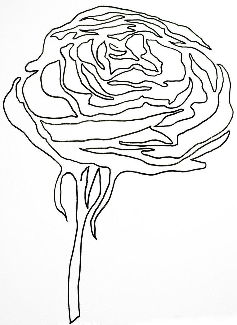 764x1046 Single Line Rose By Hummingbbird