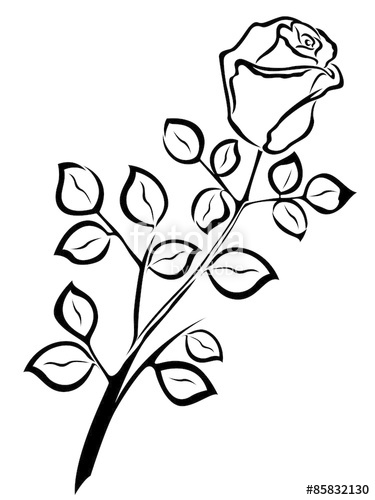 375x500 Black Outline Of Single Rose Flower Stock Image And Royalty Free