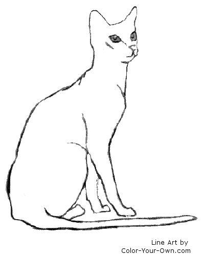 Sitting Cat Drawing