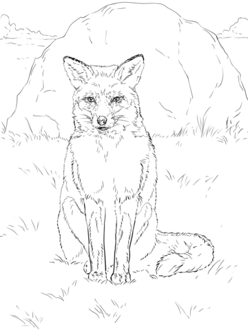 HELEN ROSE Limited Print SITTING FOX  wildlife art watercolour 228