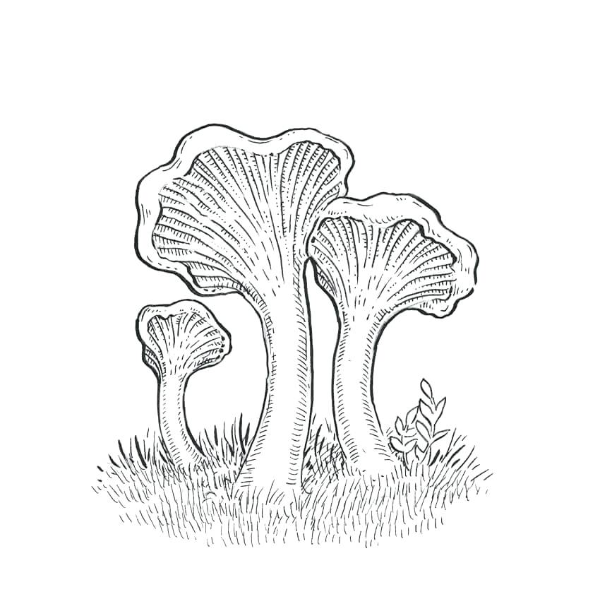 850x872 Grass Coloring Page Full Size Of Coloring Drawing Of Mushrooms 9