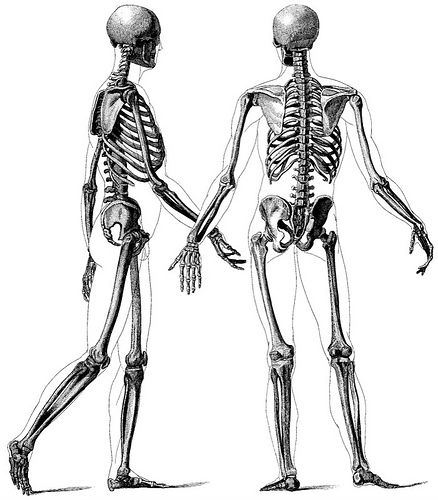 438x500 There Is A Connection Between Skeletons And The Need Of Awareness