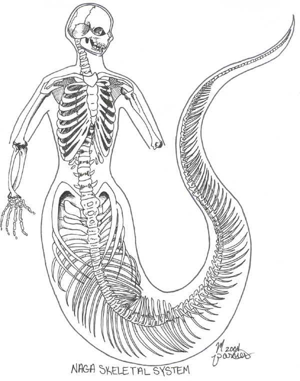 600x762 Ephemera Naga Skeletal System By ~sugarpeep Ephemera