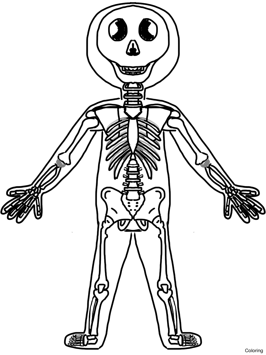936x1248 Human Skeleton With Labels Hd Page Whole Skeletal System Coloring