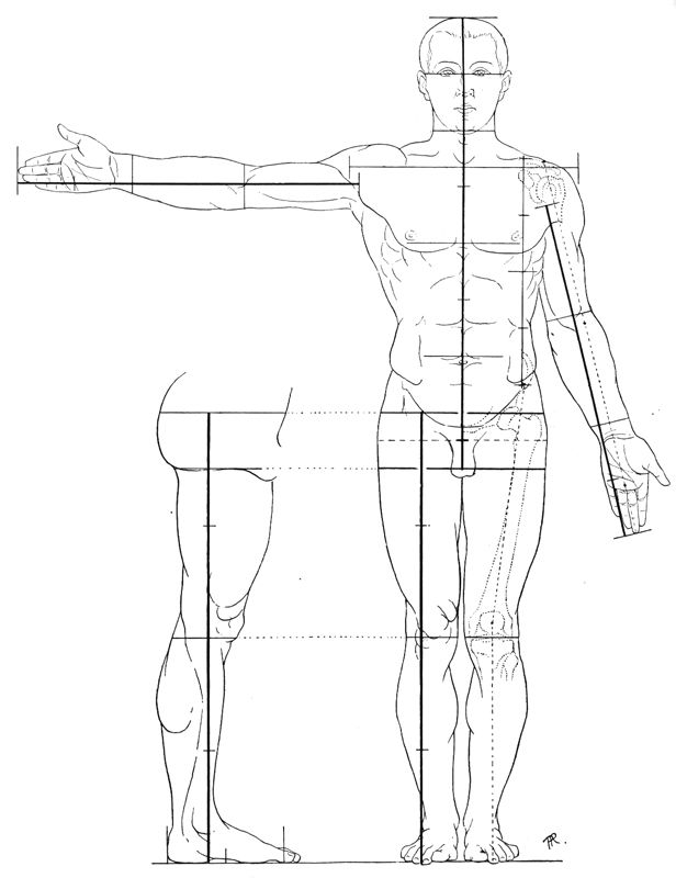 616x800 17 Best Anatomy Proportions And Skeletal System Images
