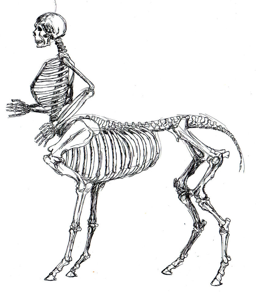 836x956 Skeletal Centaur Anatomy Study By Tursiart