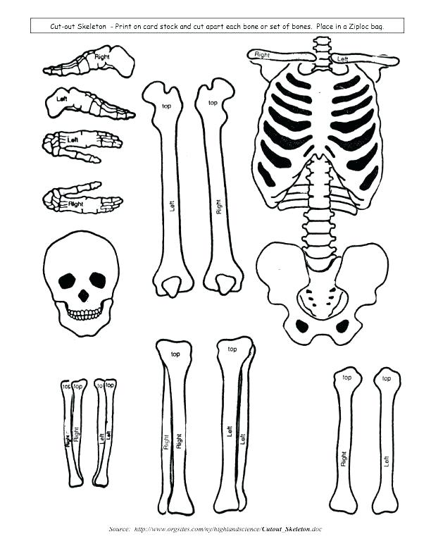 612x792 Skeletal System Coloring Book Also Skeletal 14