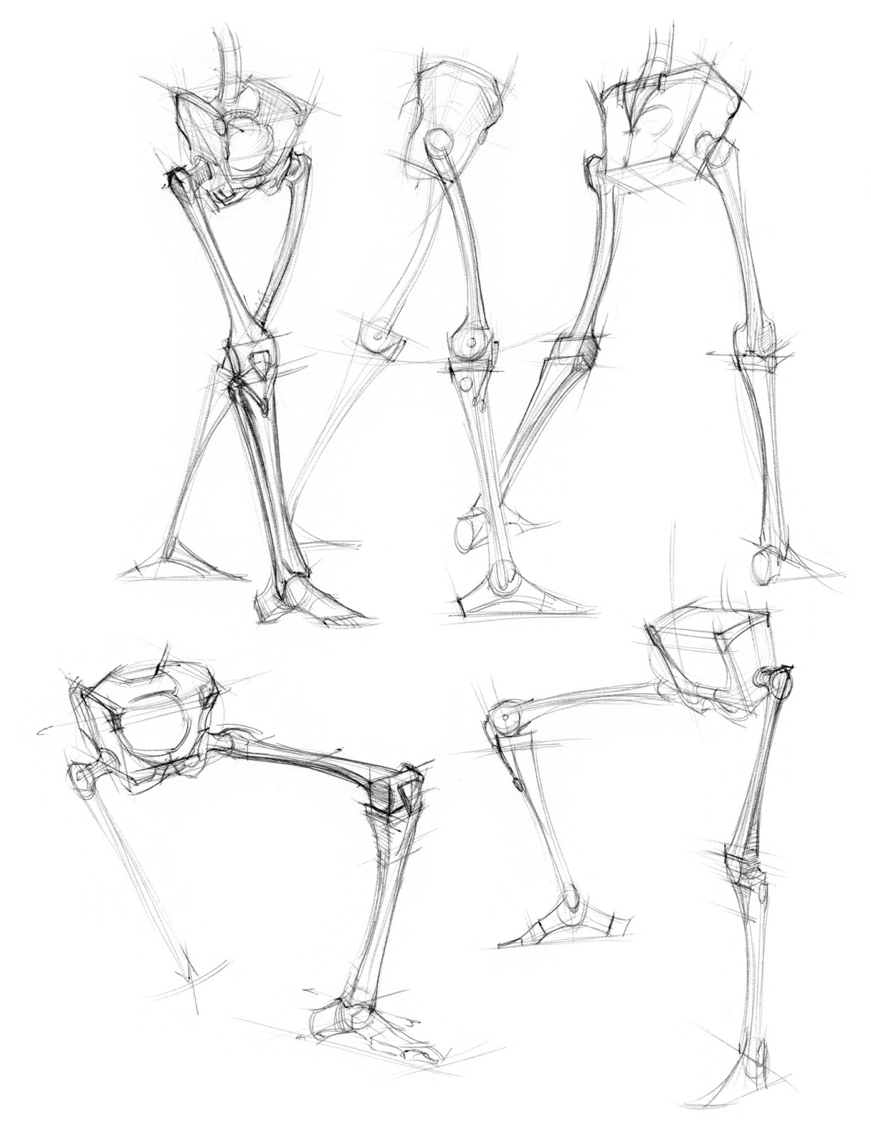 1228x1600 News Skeletal Studies
