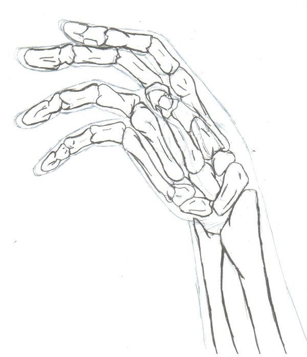 600x696 Hand's Bones By Zaharachan