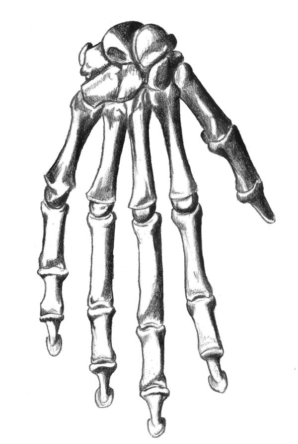 600x892 Skeletal Hand By Oatsprite