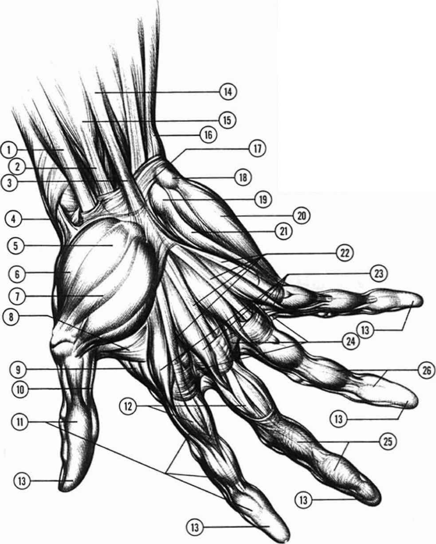 983x1227 Anatomyand Structure