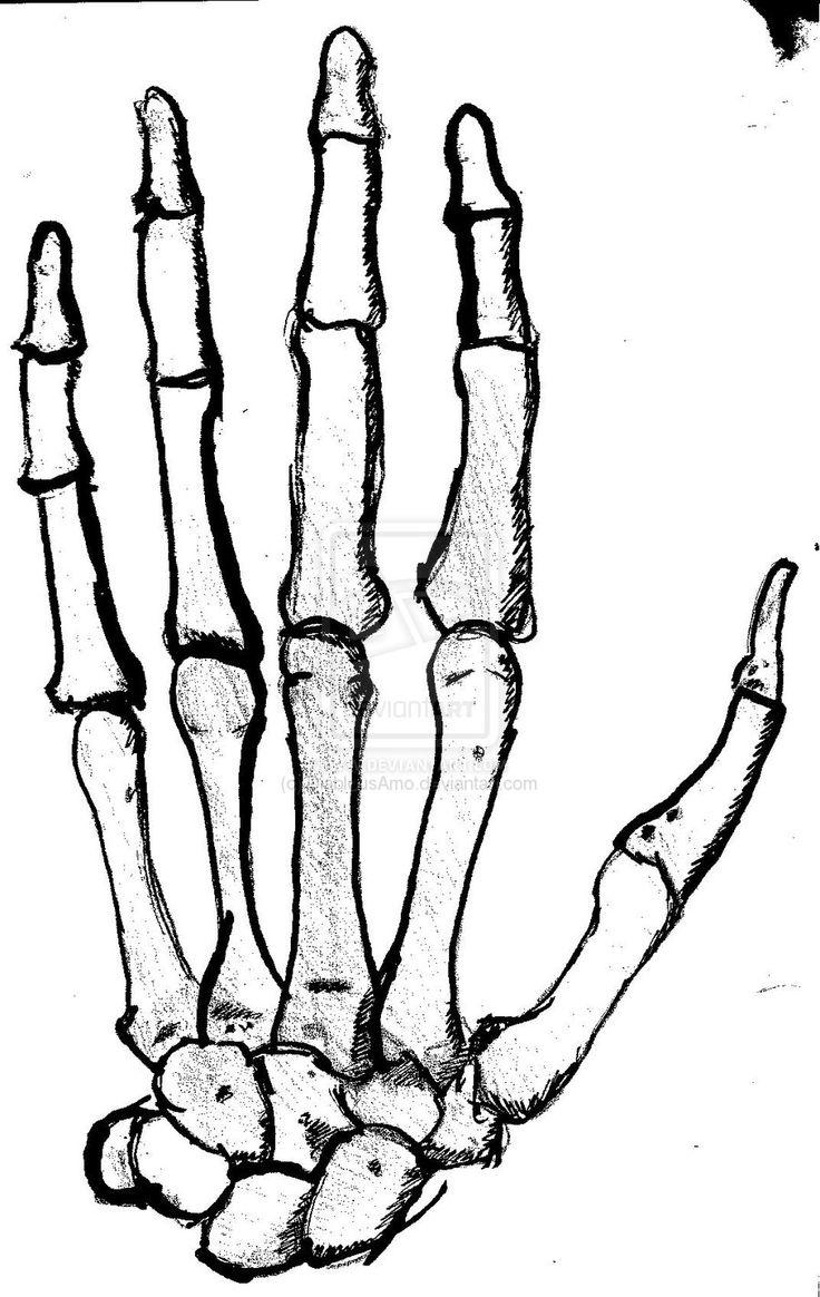 736x1164 Best Skeleton Hands Ideas On Water Sketch