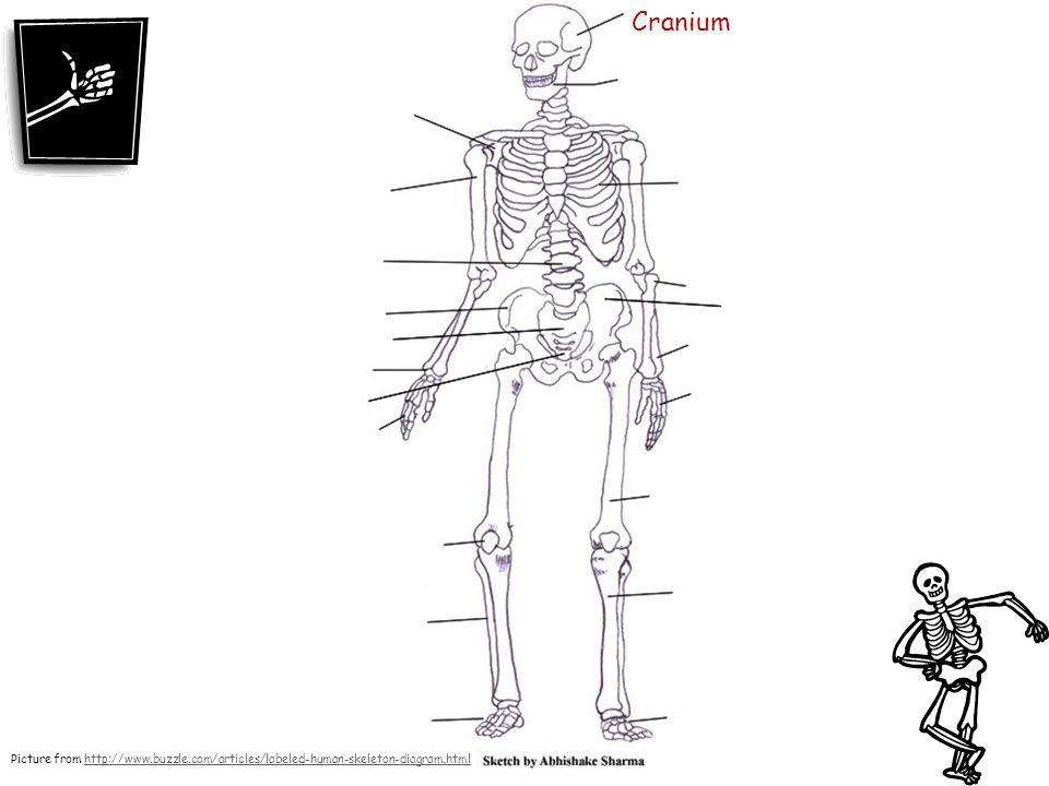 960x720 Skeletal System.