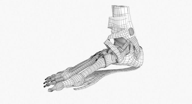 676x365 Foot Skeleton Anatomy 3d Cgtrader