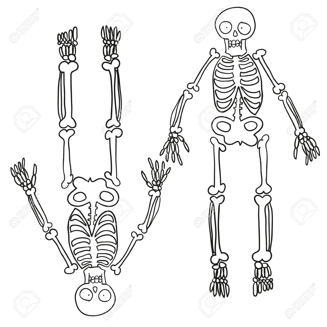 1300x1300 Hand Drawn Skeleton. Vector Sketch Royalty Free Cliparts, Vectors