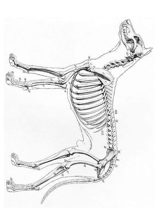 531x750 Coloring Page Dog Skeleton