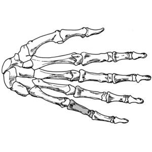 300x300 Coloring Page Hand Skeleton Draw It 2 Skeletons