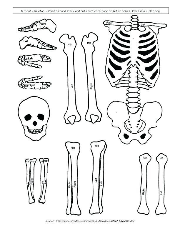 Skeleton Body Drawing At Getdrawings Com