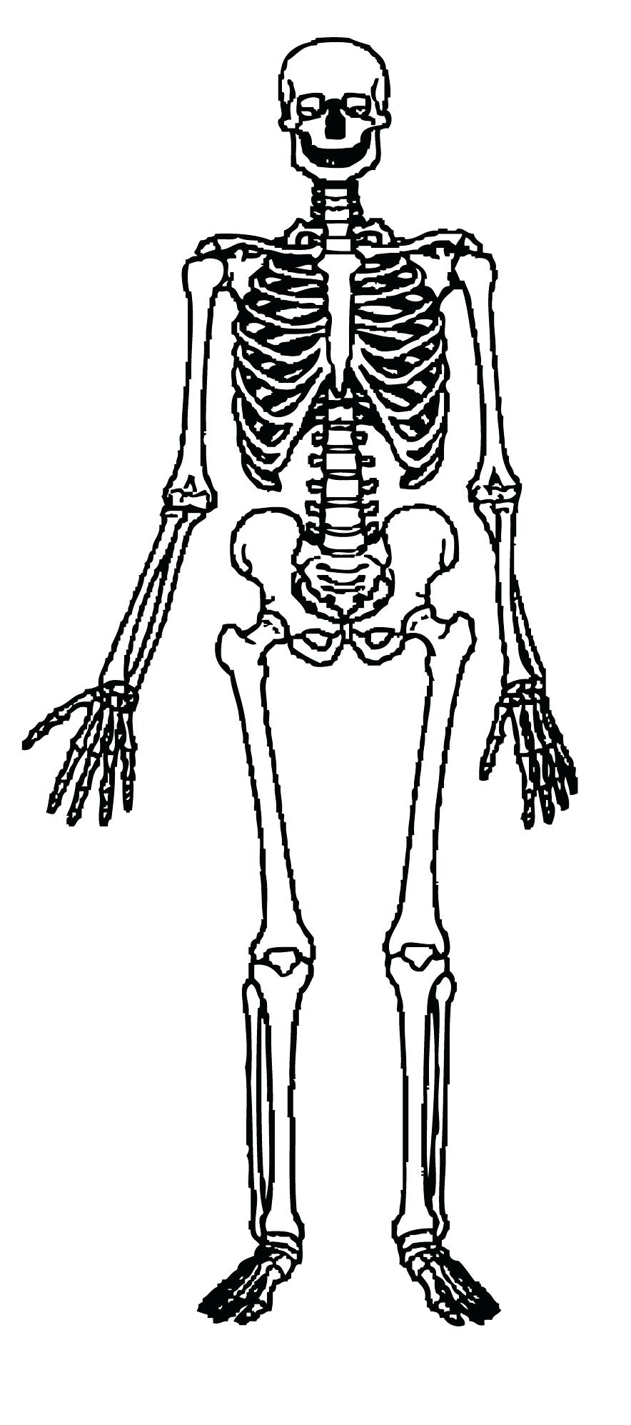 Skeleton Drawing For Kids At Getdrawings Free For Personal Use