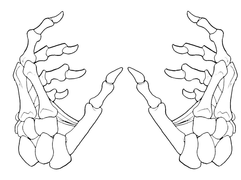 Skeleton Hand Drawing at GetDrawings.com | Free for personal use ...