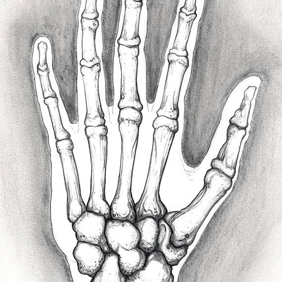 570x570 Untitled Hand Bones Pencil Sketch Of Hand Anatomy Nyc