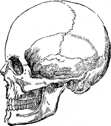 Skeleton Head Drawing
