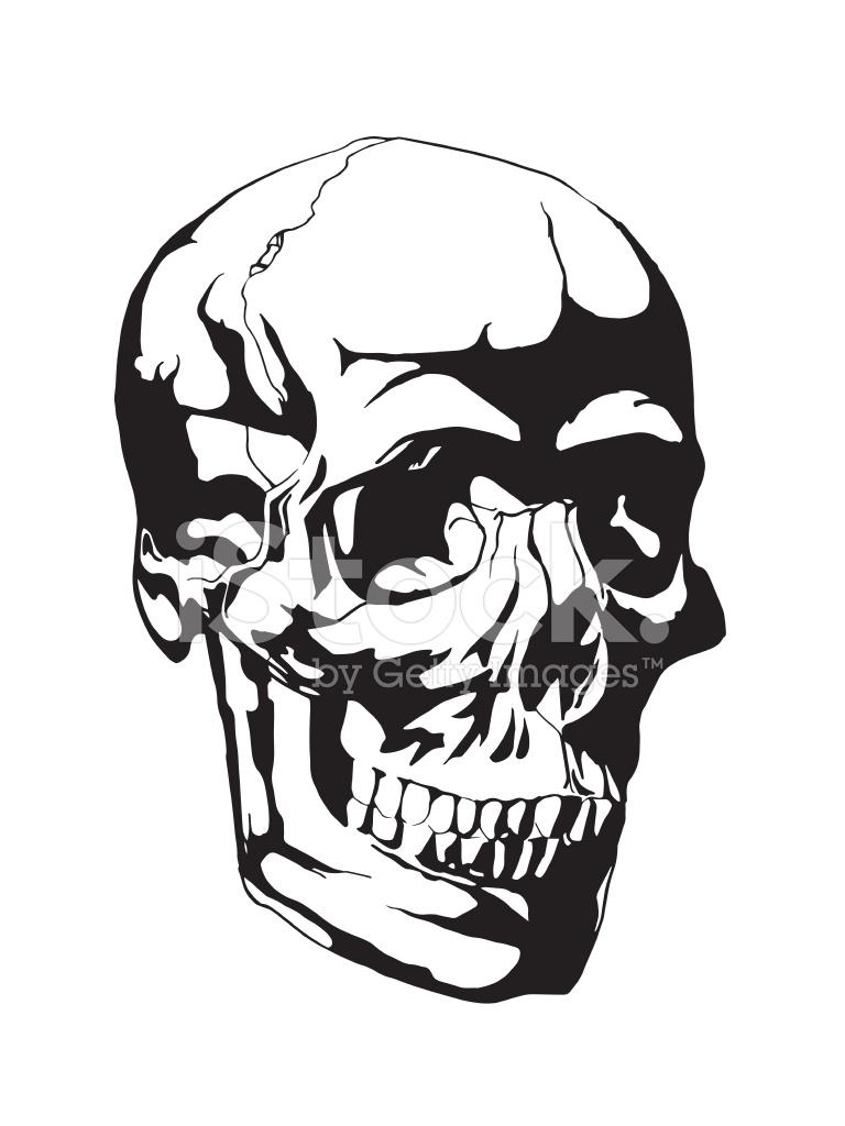 768x1024 Human Skull Anatomy Sketch Stock Vector