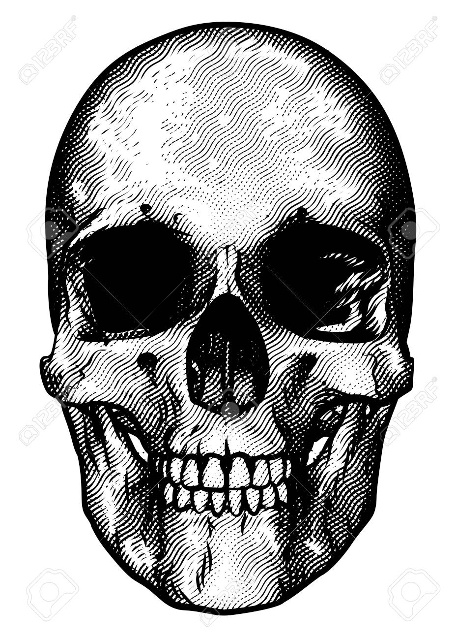 928x1300 Skull Drawing In A Vintage Retro Woodcut Etched Or Engraved Style