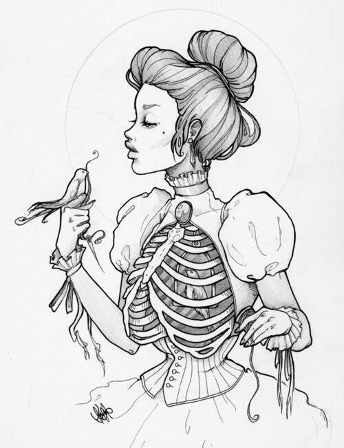 500x651 A Beautiful Drawing Of The Rib Cage Tumblr