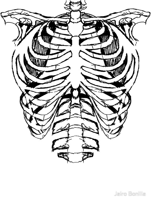 600x800 Skeleton Ribs Stickers By Jairo Bonilla Redbubble