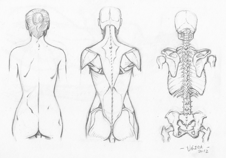 900x630 Female Back Anatomy Drawing