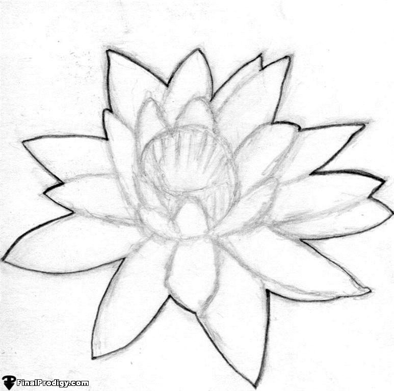 773x768 How To Draw A Water Lily