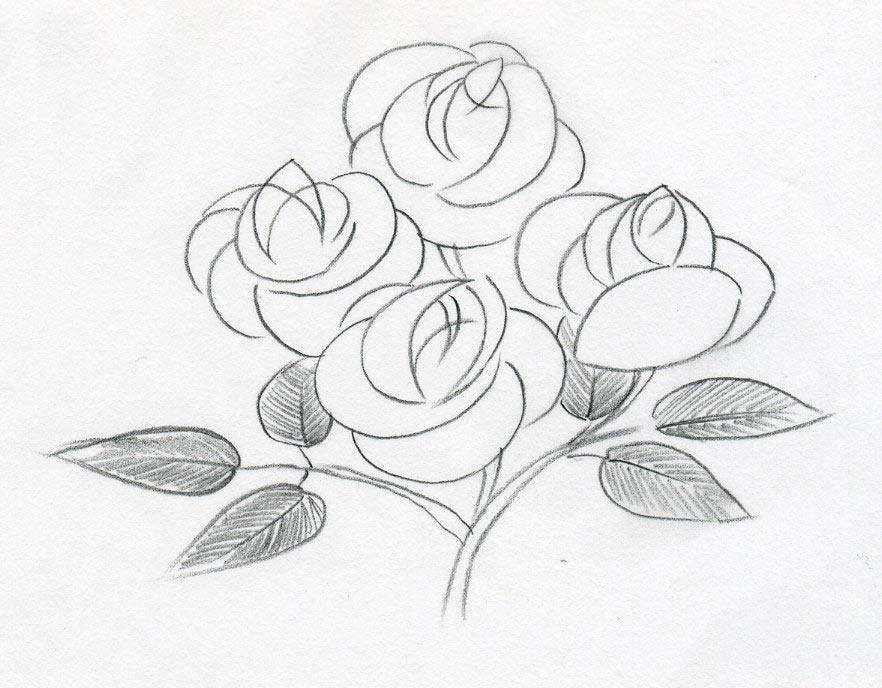 882x688 Sketch Of A Rose