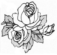 202x194 Flower Sketches And How To Draw Them Simply. Follow Along