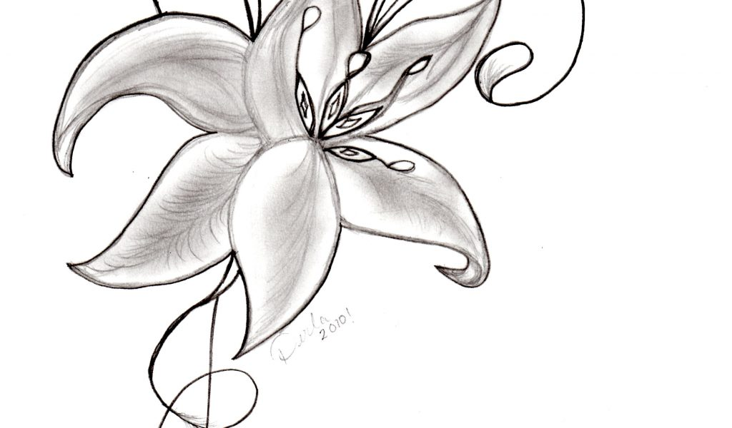 1024x600 Pencil Beautiful Flowers Sketches Drawings Of Beautiful Flower