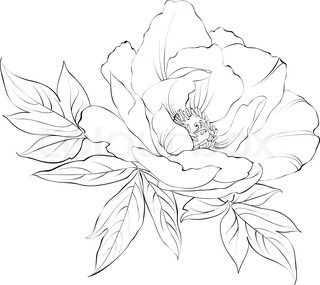 320x285 Peony Flower Line Drawing Sketch Coloring Page